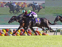 Preview: Gr.1 Tenno Sho 2019 ( Horses, Racecard, 2018 Video)