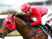 Secret To Winning The Everest Making Sure Redzel Is As Happy As Possible