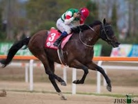 Preview & Trifecta - Chrysolite For Korea Cup Crown Yet Again