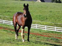 Fracture Repair in Thoroughbred Racehorses