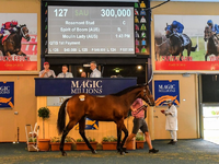 Review: Magic Million – 2018 Adelaide Yearling Sale
