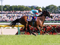 Review: Gr.1 Yushun Himba Japanese Oaks