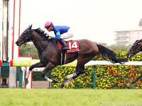 Review - Gr.1 Sprinter Stakes (Japan) 2018