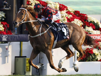 Preview: Gr.1 Longines Hong Kong Cup ( Including Full Results, 2017 Race Video, Race Info)