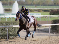 Good Curry will be making his bow at Meydan this weekend