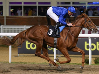 Review: Gr.3 UAE Oaks ( Horses, Analysis, Racecard, 2019 Results & Video)
