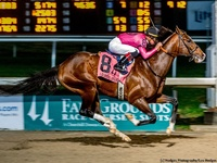 Derma Louvre Pointed To Gr.1 Kentucky Derby Via Dubai