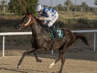 Amwaj Stars Lands Listed Al Ain Mile