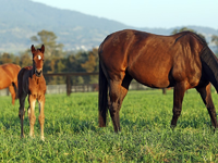 Monarch Stud: The Magic Of Breeding High Quality Thoroughbreds