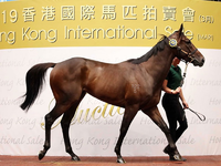 Healthy outcome as 27 horses sell at the Hong Kong International Sale