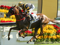 Hong Kong International Race Day
