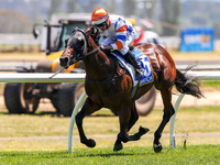 Magic Millions National Weanling Sale Graduate Stakes Claim As Australia's Most Progressive Sprinter