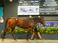 Missrock Heads To England After Topping Day One of National Broodmare Sale