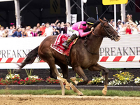 Gr.1 Preakness winner War of Will Prepares For Belmont Stakes