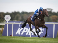 Review: Gr.1 Epsom Derby Weekend