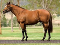 Preview: Inglis Great Southern Sale