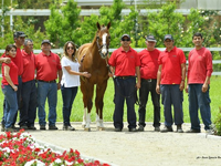 California Chrome's Life Of Luxury In Chile