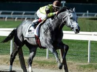 Graydar Relocated From Taylor Made to Milky Way Farm