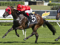 Redzel: A Breeding Gone Right