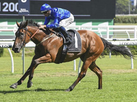 Preview: Gr.1 Memsie Stakes 2019 ( Horses, Racecard, 2018 Video)