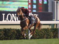 Hong Kong Stars Prep for Decembers Group 1 Events