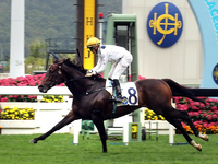 Golden Sixty Seems Intent On Hong Kong Classic Mile