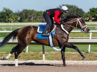 Preview: Pegasus World Cup (Race Video, Runner list, Race info)