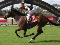 New Zealand Derby Winner for Fastnet Rock