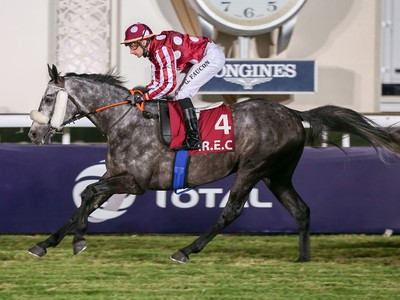 PREVIEW & TRIFECTA - Tayf Remains Favourite in The Arabian W ... Image 6