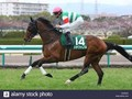 Preview & Trifecta - Tenno Sho (Autumn) 2017 Image 12