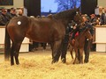 Review: Tattersalls February Sale
