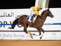 Review: Al Shindagha Sprint and Al Maktoum Challenge
