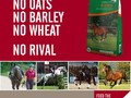 Vitamins and Minerals For Optimum Racehorse Health