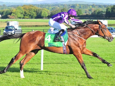 Alpha Centauri And Saxon Warrior Retired With Injuries Image 2
