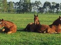 Three Bridges Thoroughbreds Being Successfull Family