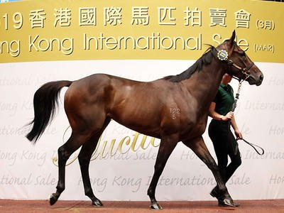 Healthy outcome as 27 horses sell at the Hong Kong Internati ... Image 1
