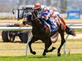 Magic Millions National Weanling Sale Graduate Stakes Claim ...