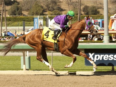 California Chrome Not Returning To Chile In 2019 Image 1