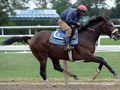Preservationist Enters Breeders' Cup Classic Rankings
