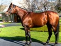 Another Miracle Sixth Winner for American Pharoah