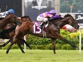 Karaka Grad Countofmontecristo Romps To Win In Singapore Mer...