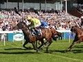 Australian Bloodstock Buys Ebor Winner Mustajeer For Caulfie...