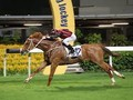 Gr.2 Jockey Club Races Showcase Hong Kong Horses At Their Re...