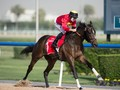 Dubai World Cup Superstars Plan Their Return To Meydan