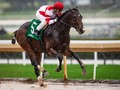 Omaha Beach Back On Track For Pegasus After Foot Issue