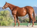 Noogee Park Thoroughbreds: Keeping It Small But Very High Qu...