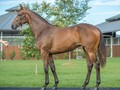 Owners of courgette dam of she will reign with golden slippe...
