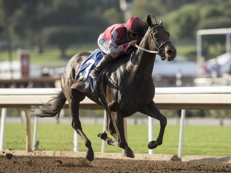 Midnight Bisou Prepares For Saudi Cup