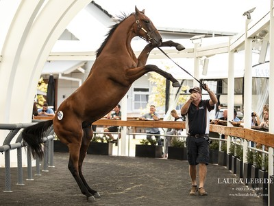 Davali Thoroughbreds: Rising One Year At A Time Image 1
