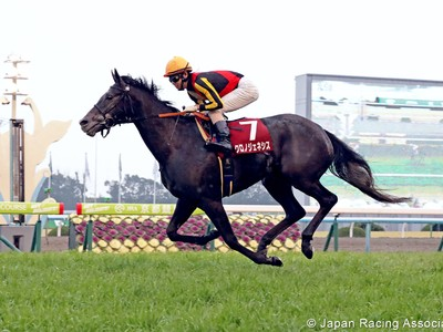 Preview: Gr.1 Osaka Hai (Runner List 2020, Racing Video, Rac ... Image 2